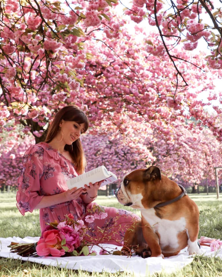 Where to find Cherry Blossoms in Paris - A Parisian Journey